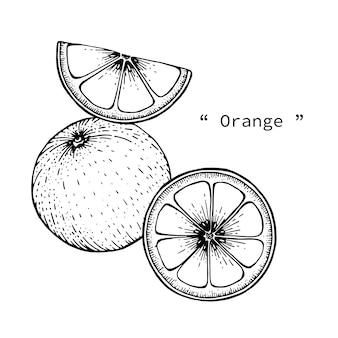 Oranje fruit illustratie met de hand getrokken lijntekeningen.
