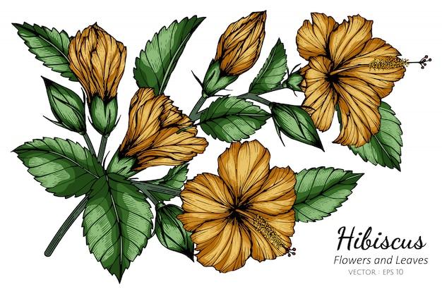 Oranje hibiscusbloem en bladtekeningillustratie met lijnkunst op witte achtergronden.