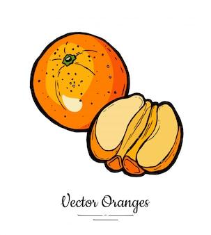 Oranje set vector geïsoleerd. hele half gepelde sinaasappels. vruchten collectie hand getrokken set.