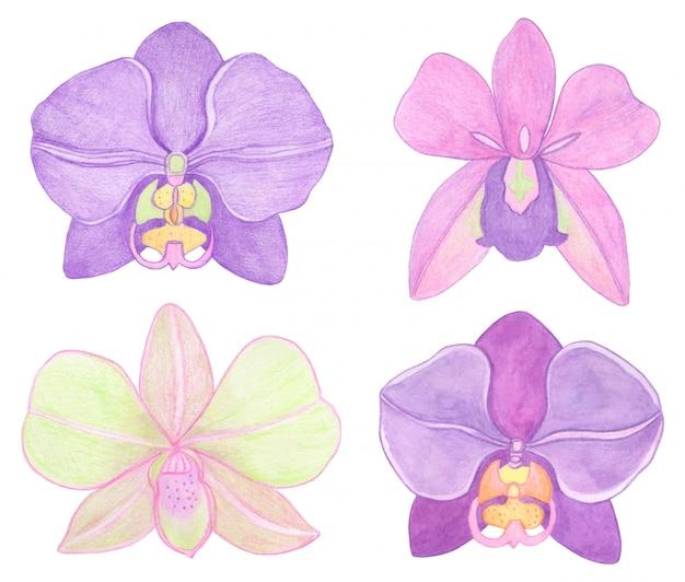 Orchidee phalaenopsis aquarel set illustratie. prachtige exotische bloem in volle bloei