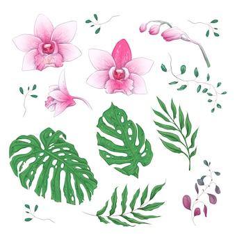 Orchidee tropische bloemen floral elementen