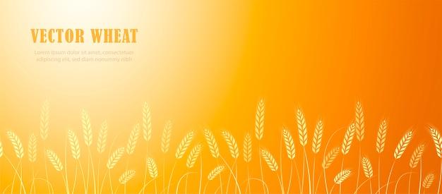 Oren van tarwe in veld horizontale rand met de plaats voor tekst.