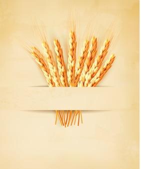 Oren van tarwe op oud papier achtergrond.