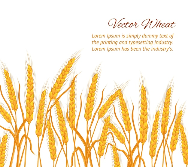 Oren van tarwe op witte achtergrond met voorbeeldtekstsjabloon