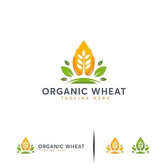 Organisch tarwe-logo, moderne tarwekorrel, landbouw-logo