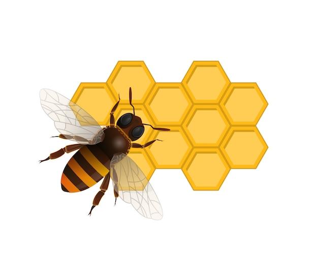 Organisch zoet voedingssymbool met honingbij