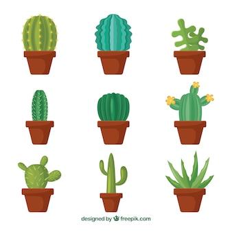 Originele verscheidenheid van platte cactussen