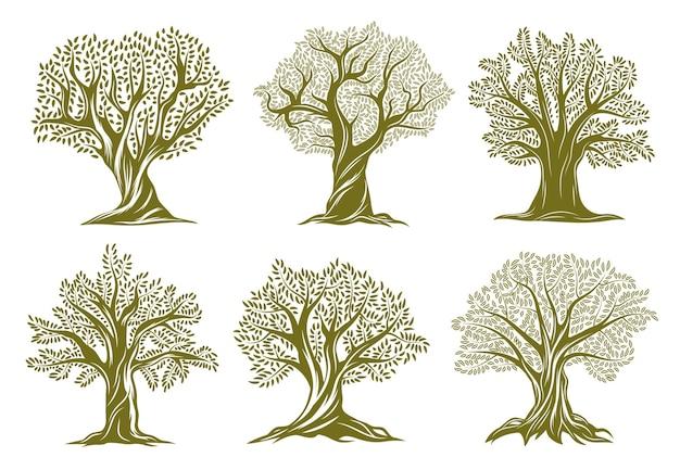 Oude gegraveerde pictogrammen van olijf-, wilgen- of eikenbomen. bomen met gedraaide stam en takken