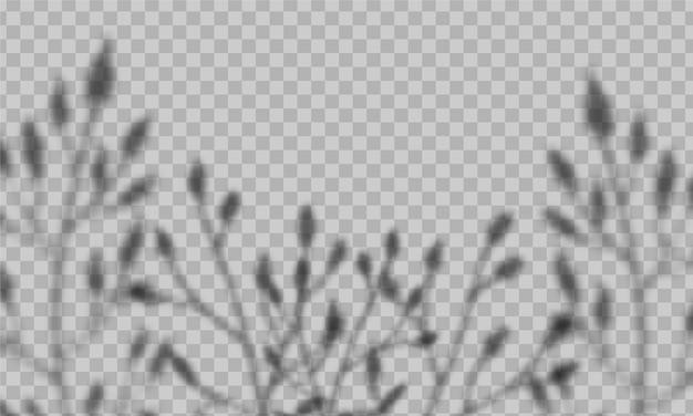 Overlay schaduweffect. met zacht licht en wazige schaduwen van planten