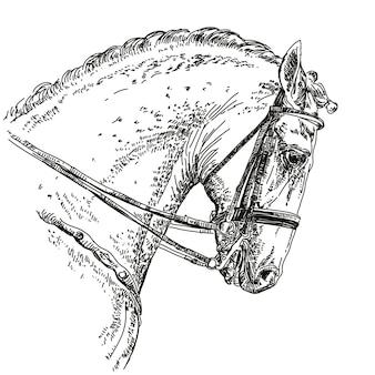 Paard hand tekening illustratie