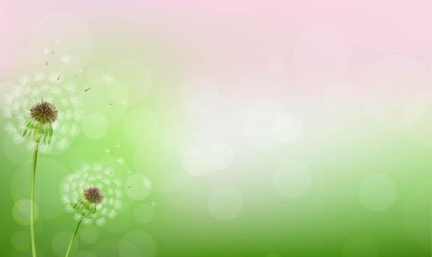 Paardebloemen en bokeh licht achtergrond