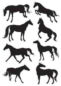 Paarden silhouetten