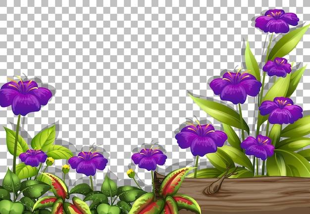 Paarse bloem frame sjabloon op transparante achtergrond