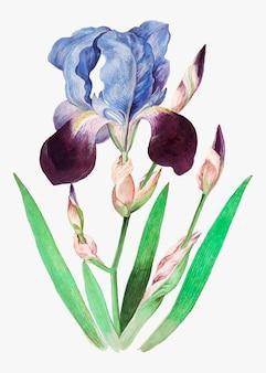 Paarse iris in vintage stijl