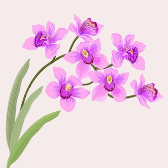 Paarse orchidee vector ontwerp