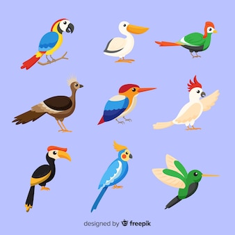 Pack van platte exotische vogels