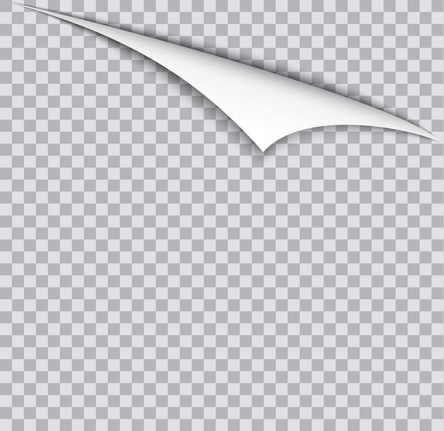 Paginakrul met schaduw op blanco vel papier.
