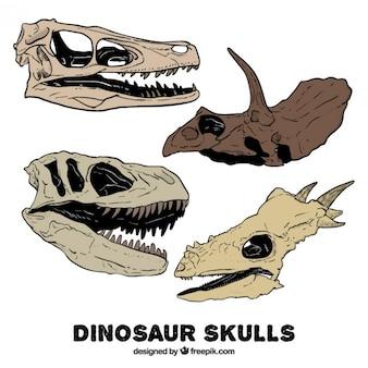 Pak van de hand getekende dinosaurus schedels