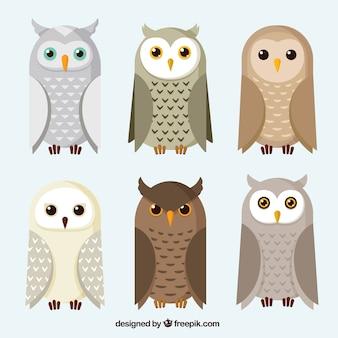 Pak van uilen en uilen in plat design