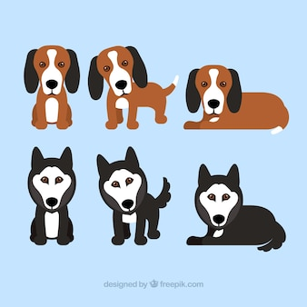 Pak van zes puppies