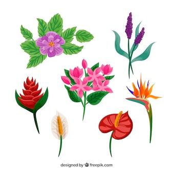 Pak van zeven hand getrokken tropische bloemen