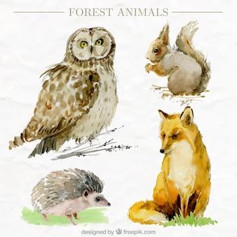 Pakje van vier aquarel bosdieren in realistische stijl