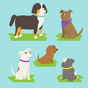 Pakje verschillende huisdieren