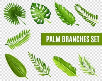 Palm boomtakken instellen