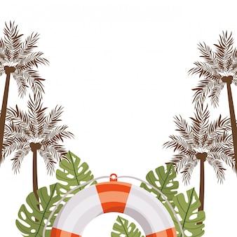 Palm met kokosnoot op witte achtergrond