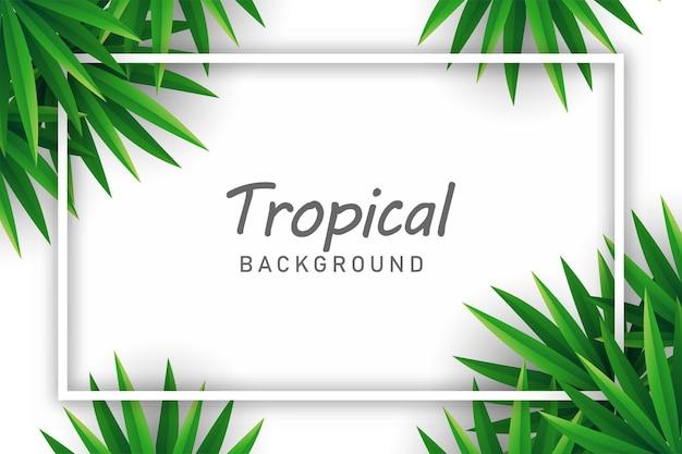 Palmbladeren achtergrond illustratie vector