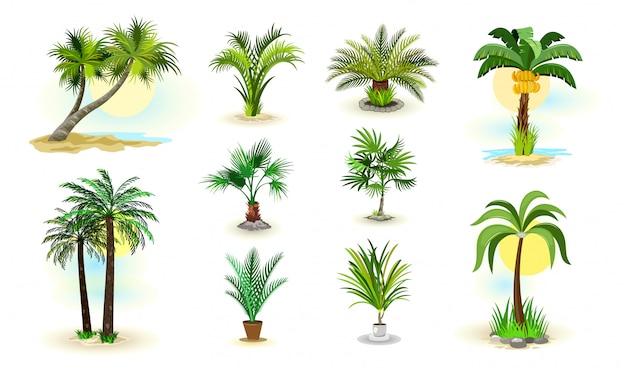 Palmbomen pictogrammen