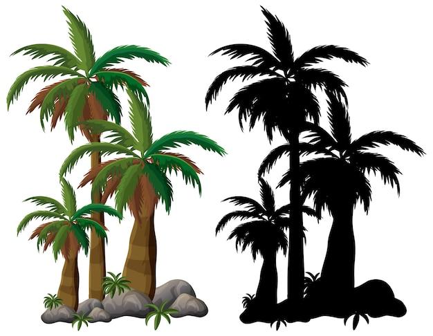Palmboom en zijn silhouet op witte achtergrond
