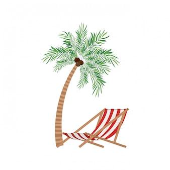 Palmboom met kokosnoot in het wit