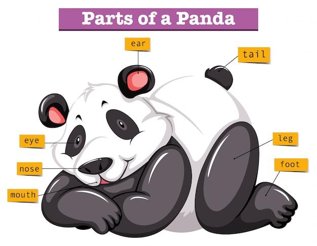 Panda en verschillende delen van het lichaam