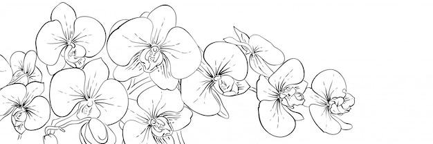Panoramische inkt orchideeën bloemen banner. lijn zwart-wit afbeelding