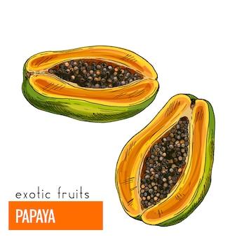 Papaja. kleur vectorillustratie.