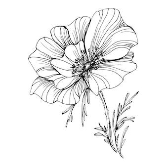 Papavers bloem. floral botanische bloem. geïsoleerd illustratie-element. hand tekenen wilde bloemen