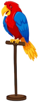 Papegaai met kleurrijke veer