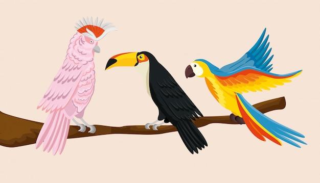 Papegaaien met toekan op tak geïsoleerde illustratie