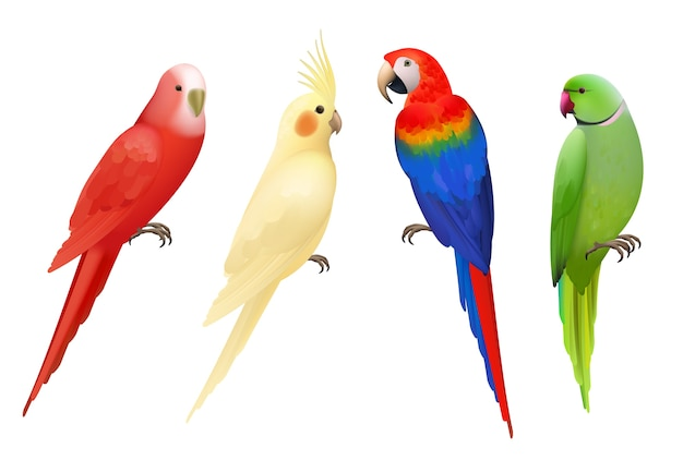 Papegaaien. tropische kleurrijke exotische vogels ara's natuur dieren realistische papegaaien collectie. realistische vogelpapegaai, kleurrijke dierenfaunaillustratie