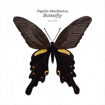 Papilio macilentus, de pauw met lange staart, is een soort vlinder