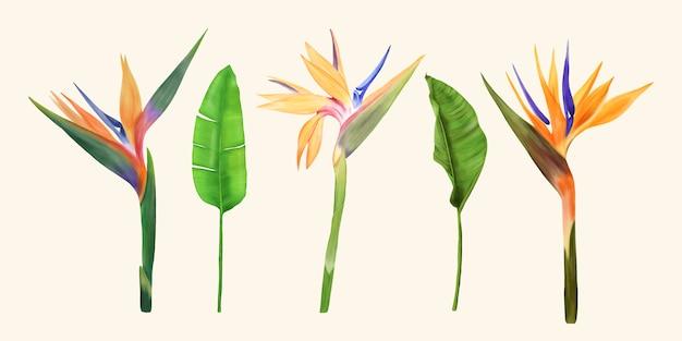 Paradijsvogel bloemen set