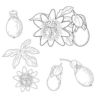Passiebloem. floral elementen in schetsstijl. lijnstijl. geïsoleerd.