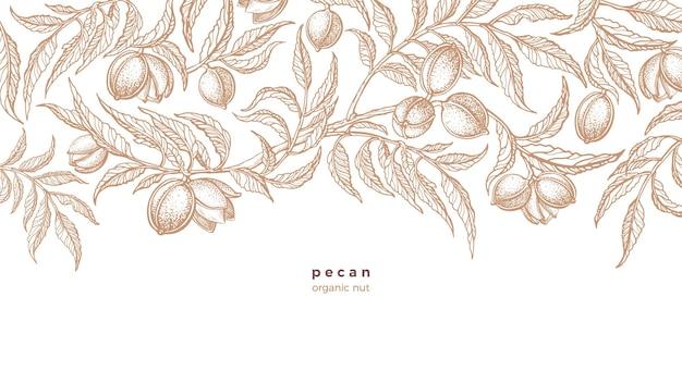 Pecan plant hand getrokken tak noten gebladerte illustratie