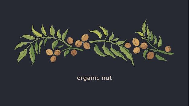 Pecannotenplant, noten, blad. vintage plantkunde illustratie. gezond biologisch eiwitrijk voedsel