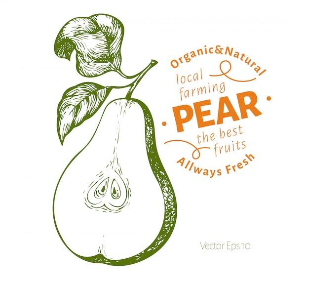 Peer met bladeren. hand getekend vector tuin fruit illustratie. gegraveerde stijlfruit. vintage botanische illustratie.