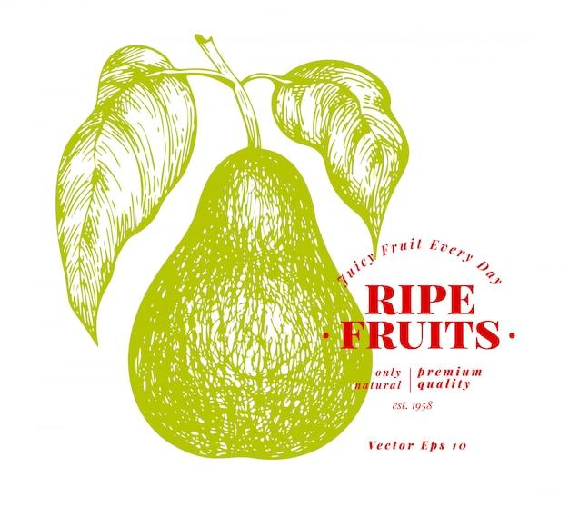 Peer met bladeren. hand getekend vector tuin fruit illustratie.