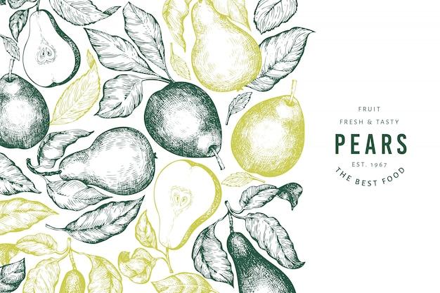 Peer sjabloon. hand getekend tuin fruit illustratie. gegraveerde stijl tuin retro botanisch.