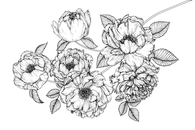 Peony blad- en bloemtekeningen. vintage hand getrokken botanische illustraties.