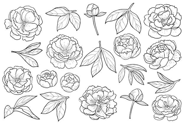Peony bloemen en bladeren set floral outline collectie voor romantische compositie en kleurboeken